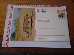144284 CARTOLINA POSTALE  POSTCARD POSKAART SWA LUIPERD LEOPARD - Sud Africa