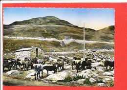 ANDORRE VALLS D ' ANDORRA   PAS De CASA Cpsm  Animée Cabane Du Berger Mouton  118   Apa Poux - Andorra
