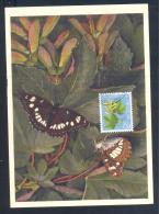 Switzerland  1975 Maximum Card Butterfly Schmetterling Mariposa Papillon Farfalla; White Admiral (Limenitis Rivularis) - Schmetterlinge