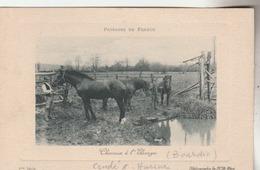 ( Condé Sur Huisne) : Chevaux à L'élevage. ( Ferme Bourdin.) - Otros Municipios