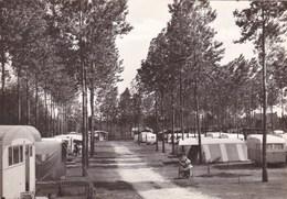 Berlare, Camping Dennebos (pk45919) - Berlare