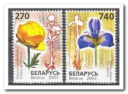 Wit Rusland 2003, Postfris MNH, Flowers - Wit-Rusland