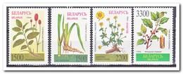 Wit Rusland 1996, Postfris MNH, Plants - Wit-Rusland