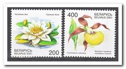 Wit Rusland 2001, Postfris MNH, Flowers - Wit-Rusland