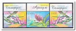 Wit Rusland 2006, Postfris MNH, Flowers, Insects - Wit-Rusland