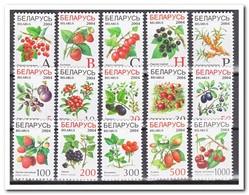 Wit Rusland 2004, Postfris MNH, Fruit - Wit-Rusland