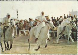 Bahrain - Horse Race - Rifa - Bahreïn