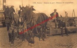 Scènes Du Port - Chevaux De Corporations - Natie Paarden - Antwerpen - Antwerpen