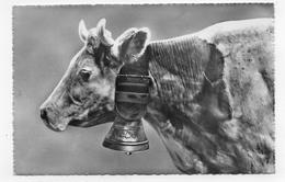 SUISSE - N° 3624 - PHOTOGLOB WEHRIL & VOUGA ZURICH - VACHE - FORMAT CPA NON VOYAGEE - Autres