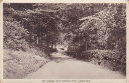 The Avenue Near Broomcliffe, Llanidloes (pk45992) - Montgomeryshire