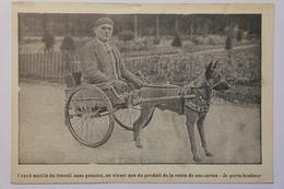CPA Attelage De Chien - Grand Mutilé Du Travail Sans Pension - NAS01 - Chiens