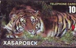 Télécarte  * Animal * TIGRE * TIGER (886)  FELIN *   Phonecard * Telefonkarte * TIJGER - Jungle