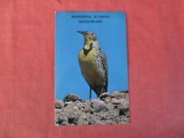 Meadowlark  Wyoming > Ref 2940 - Birds