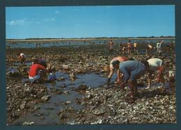 ILE DE RE - La Pêche Aux Huîtres - Ile De Ré