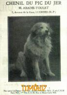 CHENIL DU PIC DU JER / CHIENS DE MONTAGNE DES PYRENEES / M. ABADIE TOULET / LOURDES / H.P.  / PUB 1925 - Vieux Papiers