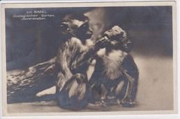 SUISSE BALE Les Singes De Java , Jardin Zoologique , Timbre , Tampon - BS Bâle-Ville