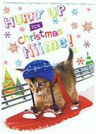 CHATS   HURRY UP  IT S CHRISTMAS TIIIIME  CARTE MERRY CHRISTMAS  ....  ****     A   SAISIR   ***** - Katten