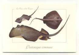 Pastenague Commune - Pesci E Crostacei