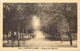 RB - Editeur Riviere Bureau -ref A455- Morbihan  -carnac Plage - Avenue Des Menhirs   - Carte Bon Etat - - Carnac