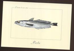 Merlu - Pesci E Crostacei