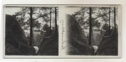 Plaques Stérèoscopiques Foret De Fontainebleau - Stereoscopes - Side-by-side Viewers