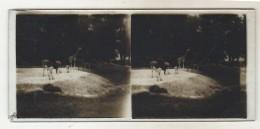 Plaques Stérèoscopiques   Zoo De Vincennes - Stereoscopes - Side-by-side Viewers