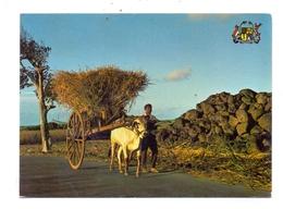 MAURITIUS - Transport Des Cannes A Sucre / Sugar / Zucker - Mauritius