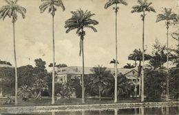 Barbados, B.W.I., Codrington College, Lake, Palm Trees (1912) Plimmer's Stores - Barbados