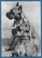 CANI DOGS CUCCIOLONI EDI E ELFI DI VILLA TERGESTE - Hunde
