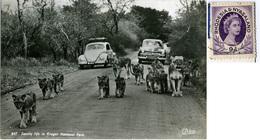 RSA  SOUTH AFRICA  Family Life In Kruger National Park  Lions  Zoo  Car VW Kafer Beetle  Rhodesia & Nyasaland Stamp - Afrique Du Sud
