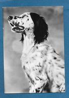 CANI DOGS - Hunde