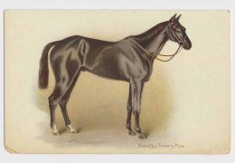 AI59 Artist Signed Dorothy Travers Pope - Horse - Other Illustrators