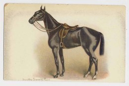 AI59 Artist Signed Dorothy Travers Pope - Horse With Saddle - Other Illustrators