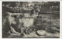 75 - PARIS 05 - #373 - Jardin Des Plantes - Le Lama +++ JH / J. H. +++ 1907 - Arrondissement: 05