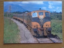 Trein - Train / Ireland / CIE - Dieselelektr. Lokomotive 196 Bei Killarney Im Mai 1980 --> Unwritten - Kerry