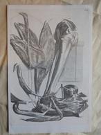 Ancienne Planche De 3 Reproductions De Dessins Médicaux - Matériel Médical & Dentaire
