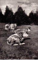 Fidèles à La Terre - Edition Lacats Gland - Troupeau De Vaches - Jura Vaudois - Visa De Censure Italien 1916 - VD Vaud