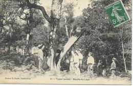 40-TYPES LANDAIS - Récolte Du Liège...1909  Animé - France