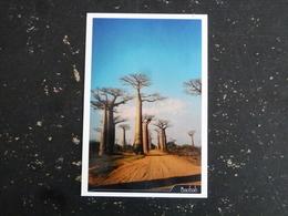 MADAGASCAR - BAOBAB ARBRE TREE - Madagascar