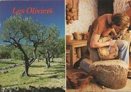 CPSM Les OLIVIERS - L'Homme Et L'Olivier Avec Sculpteur - Arbres