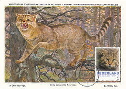D33428 CARTE MAXIMUM CARD 2013 NETHERLANDS - WILD CAT CHAT SAUVAGE CP MUSEUM ORIGINAL - Big Cats (cats Of Prey)
