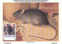 D33432 CARTE MAXIMUM CARD 2013 NETHERLANDS - LE RAT NOIR RATTUS BLACK RAT CP MUSEUM ORIGINAL - Knaagdieren