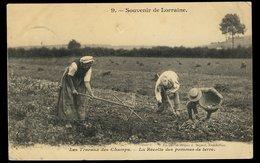 Souvenir De Lorraine - Les Travaux Des Champs - La Récolte Des Pommes De Terre - Lorraine