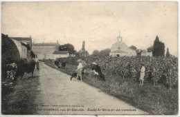33 - B26457CPA - VIGNONET - ST EMILION - Eglise St Brice Et Vignobles -Vaches - Très Bon état - GIRONDE - France