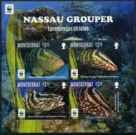 2016 Montserrat, Fish, Nassau Grouper, WWF,  Souvenir Sheet, MNH - Unused Stamps