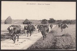 En Beauce - Retour Du Troupeau - Elevage