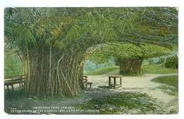 1900's, Jamaica, Greetings Pc, 'In The Shade Of The Bamboo Tree.' Printed Pc, Unused. - Jamaica
