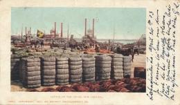 H129 - ETATS-UNIS - Cotton On The Levee - NEW-ORLEANS - New Orleans