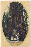Cpa Usa, Yosemite Valley, California , Big Trees ( Séquoïa, Tunnel, Attelage )  ( S. 2555 ) - Yosemite