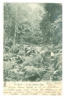 1905, Australia, Blue Mountains, 'En Route- To The Federal Pass.' Printed Pc, Used. Auburn Pmk. - Sydney